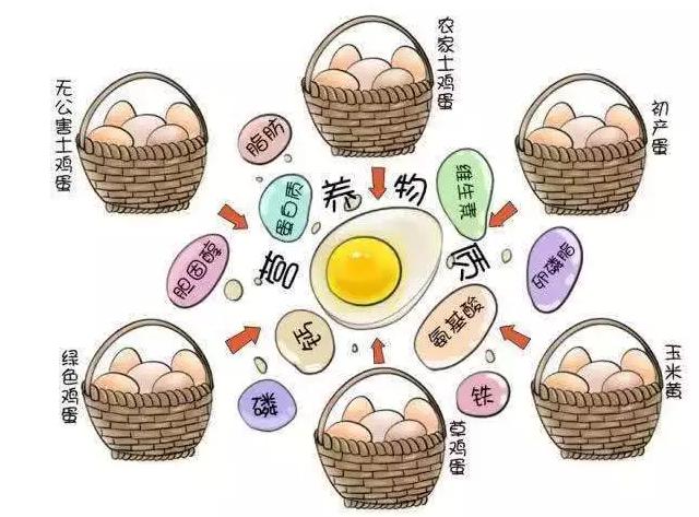 遍寻菜谱收集的鸡蛋7中新吃法,第2中最好,第7中最营养